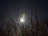 Zie de maan schijnt door de bomen II