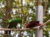 Twee pratende vogels