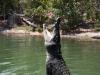 Koekhappen voor krokodillen