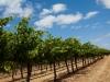 Wijnvelden Barossa Valley