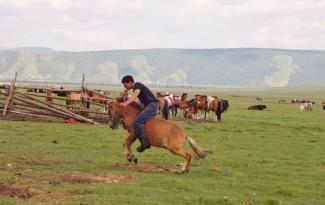 Paard zadelmak maken